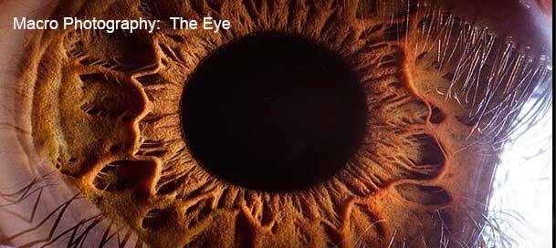 eyeball-macro